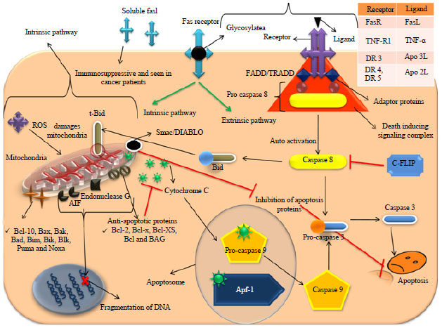 Apoptosis and Other Alternate Mechanisms of Cell Death