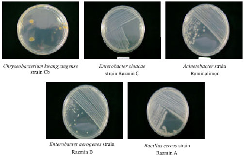 Transfer of Bacillus cereus Spores from Packaging Paper into Food