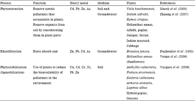 Assessment of Heavy Metal Contamination in Different Vegetables
