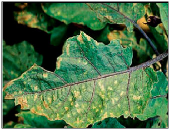 Bioefficacy of Leaf Extract of Neem (Azadirachta indica A  Juss) on