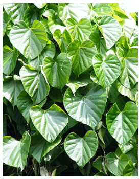 Nigerian Folklore Medicinal Plants with Potential