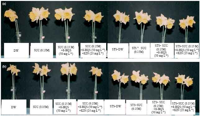 efficacy of sts pulsing and floral preservative solutions