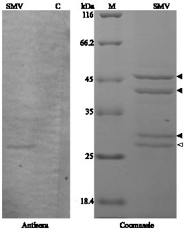 Detection and Identification of Some Soybean Viral Mosaic