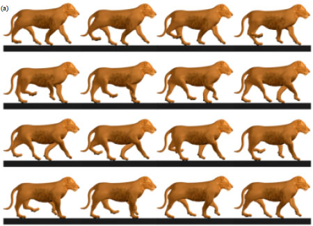 Automated Animation of Quadrupeds Using Procedural Programming