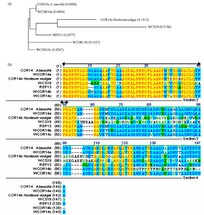 Isolation of a Cold-Responsive Gene (Wcor14) Encoding a Chloroplast-Targeted Protein from ...