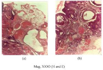 Effect of Garcinia kola Seed Extract on Female Reproductive
