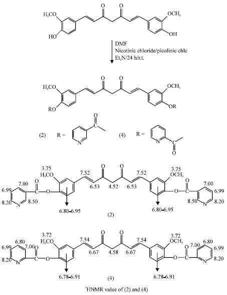 Antibacterial Activities of Curcumin Bioconjugates
