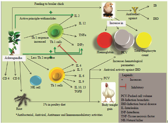 investigating antimicrobial properties of plants Title: investigation on antibacterial and antioxidant activities, phenolic and  to  examine the antibacterial and antioxidative properties of seven edible plants.