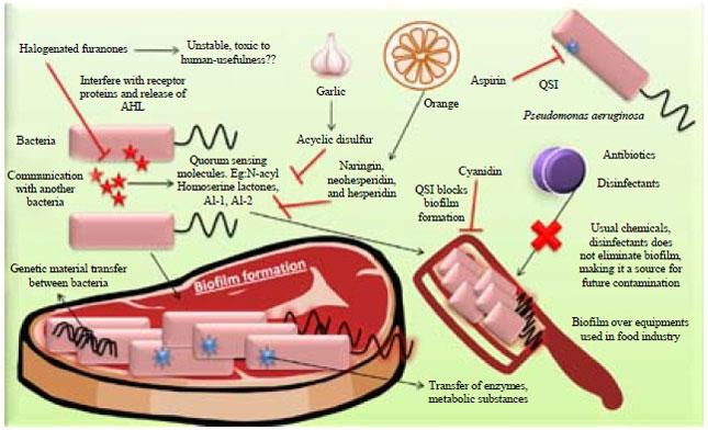 quorum sensing gram positiv