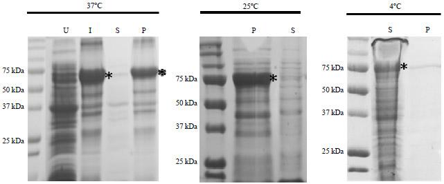 Cloning of Japanese Quail (Coturnix japonica) Follistatin