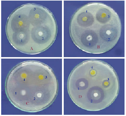 thesis on probiotics in shrimp culture The use of probiotics in shrimp aquaculture ali farzanfar single strains of probiotics are less effective than mixed-culture probiotics phd thesis , centre.