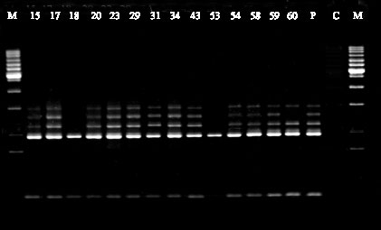Generuler 1kb Dna Ladder Sm0313 Best Ladder 2017