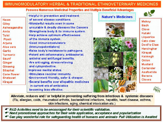 Immunomodulatory and Therapeutic Potentials of Herbal, Traditional