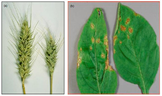 Nanotechnology: Scope and Application in Plant Disease