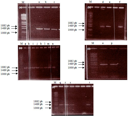 identification of morphological and physiological characteristics Identification of morphological and physiological characteristics of unknown bacteria  morphological and physiological features such as cell shape,.