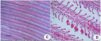 Image for - Dietary Calcium Reducing Effects of Waterborne Lead Uptake in Nile Tilapia (Oreochromis niloticus)