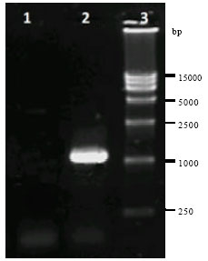 Image for - Construction of a Recombinant Fowlpox Virus Expressing the E0/E2 Proteins of Classical Swine Fever Virus and its Evaluation in Experimental Animals