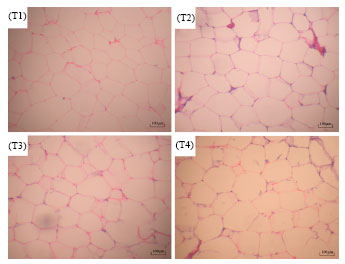 Image for - Effect of Dietary Energy on Growth Performance and Fat Deposition of Lantang Growing Pigs