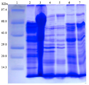 Image for - Effect of a Commercial Probiotic and Cassia auriculata Leaf Powder on Vibriosis Induced Freshwater Prawn, Macrobrachium rosenbergii