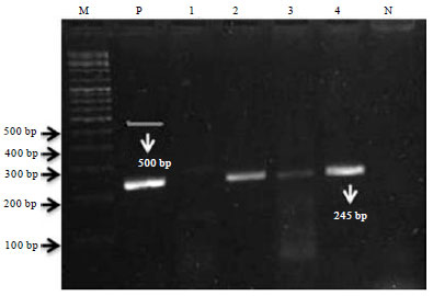 Image for - Identification of Mycobacterium tuberculosis Complex by Culture and Duplex Polymerase Chain Reaction in Bovines