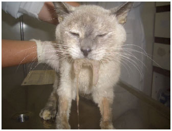 Image for - Metronomic Chemotherapy in Small Animal Practice: An Update