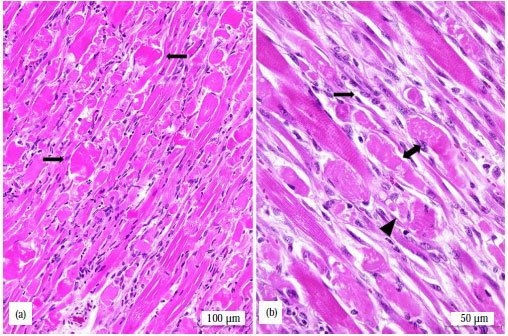 Image for - Clinical and Pathological Changes in Sheep During a Monensin Toxicity Outbreak in Brasilia, Brazil