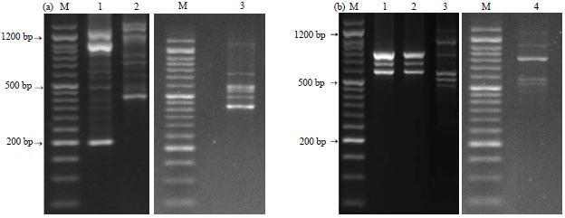 Image for - Molecular Characterization of Isolated Mannheimia haemolytica and Pasteurella multocida  from Infected Sheep and Goats Using RAPD and ERIC Markers