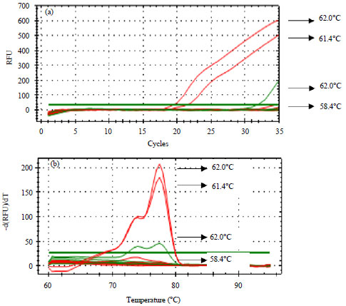 Image for - Real-Time Polymerase Chain Reaction for Halal Authentication of Gelatin in Soft Candy