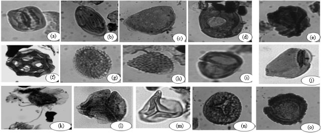 Image for - Palynology and Paleoenvironments of the Upper Araromi Formation, Dahomey Basin, Nigeria