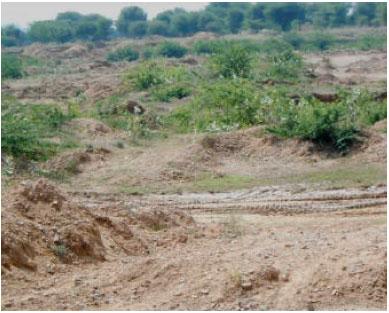 Image for - Floristic Diversity Assessment in River Sand Mining near Palri Bhoptan Village, Kisangarh Tehsil, Ajmer District, Rajasthan, India