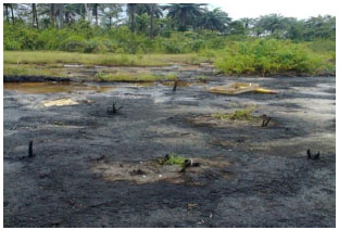 Image for - Geoelectrical Characterization of Matured Petroleum Hydrocarbon Impacted Soil in Port Harcourt, Nigeria