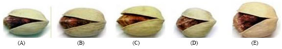 Image for - Moisture Diffusivity of Five Major Varieties of Iranian Pistachios