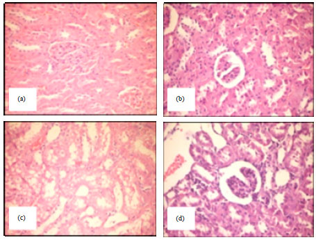 Image for - Rheological Studies and Effect of Feeding Guar (Cyamopsis tetragonoloba L.) Seeds on Histology of Some Organs of the Albino Rats
