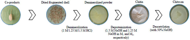 Image for - Extraction and Worth Evaluation of Chitosan from Shrimp and Prawn Co-products