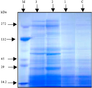 Image for - The Inductive Role of Vitamin C and its Mode of Application on  Growth, Water Status, Antioxidant Enzyme Activities and Protein Patterns of  Vicia faba L. cv. Hassawi Grown under Seawater Irrigation