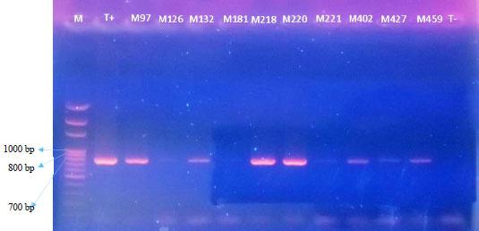 Image for - Identification and Incidence of Cassava Mosaic Begomoviruses in Togo