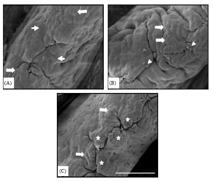 Image for - Performance and Histological Changes of the Intestinal Villi in Chickens Fed Dietary Natural Zeolite Including Plant Extract