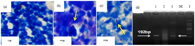 Image for - Standardize Polymerase Chain Reaction (PCR) Technique for the Detection of Pathogenic Serovars of Mycobacterium a. avium Infection in Layer Chicken