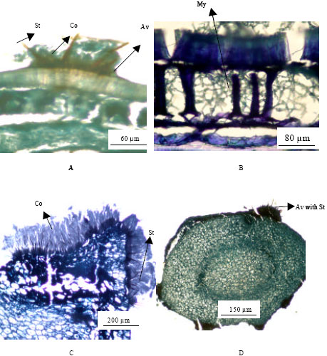 Image for - Detection of Seed-Borne Fungi and Site of Infection by Colletotrichum truncatum in Naturally-Infected Soybean Seeds