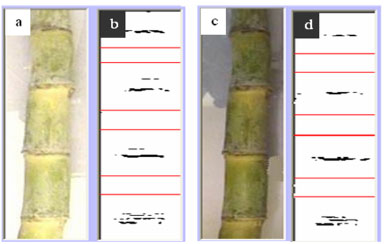 Image for - Identification of Sugarcane Nodes Using Image Processing and Machine Vision Technology