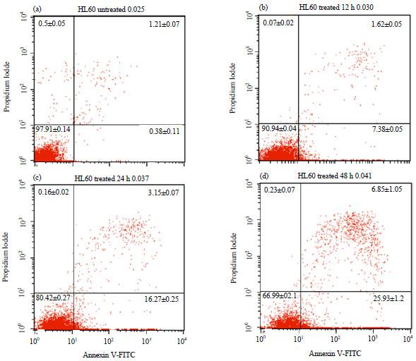 Image for - Antiproliferative and Apoptotic Effect of Newcastle Disease Virus (NDV) Strain AF2240 in Human Promyelocytic Leukemia Cells (HL60)