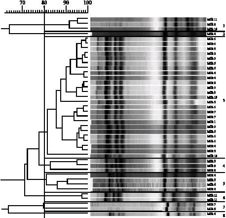 Image for - Evolution of the Raw Cow Milk Microflora, Especially Lactococci,Enterococci, Leuconostocs and Lactobacilli over a Successive 12 Day Milking Regime
