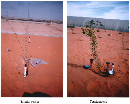 Image for - Salinity Sensor: A Reliable Tool for Monitoring in situ Soil Salinity under Saline Irrigation