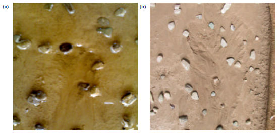 Image for - Effect of Rock Fragments Cover on Distance of Rill Erosion Initiation and Overland Flow Hydraulics