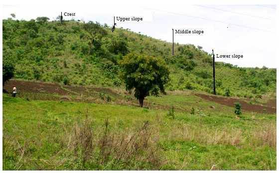 Image for - Distribution of Potassium Forms along a Hillslope Positions of Newer Basalt on the Jos Plateau Nigeria