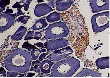 Image for - Reproductive Biology and Histological Studies in Abu Mullet, Liza abu in the Water of the Khozestan Province