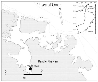 Image for - Phytoplankton Community Structure of a Mangrove Habitat in the Arid Environment    of Oman: The Dominance of Peridinium quinquecorne