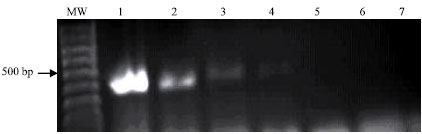 Image for - Evaluation of Polymerase Chain Reaction for Direct Detection of Escherichia coli Strains in Environmental Samples