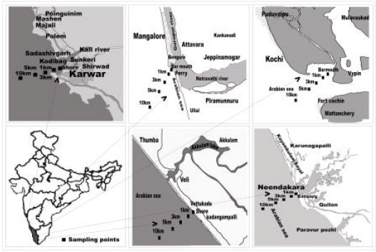 Image for - Prevalence of Autochthonous Vibrio cholerae and Role of Abiotic Environmental Factors in their Distribution along the Kerala-Karnataka Coast, India
