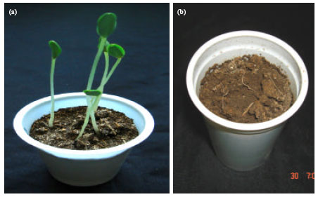 Image for - Materials for Pythium Flora of Saudi Arabia (I) Occurrence, Pathogenicity and Physiology of Reproduction of Pythium aphanidermatum (Edson) Fitzp. Isolated from North and East Regions of Saudi Arabia